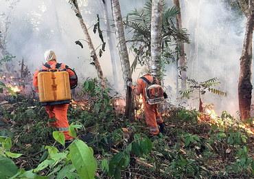 """Papież modli się o ugaszenie pożarów w Amazonii. """"Leśne płuco niezbędne dla Ziemi"""""""