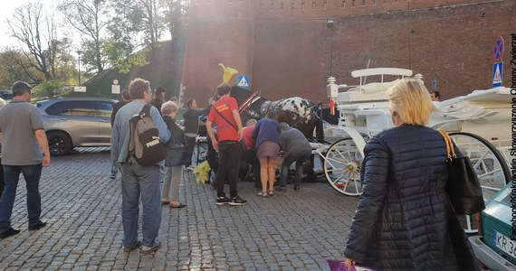 Prokuratura umorzyła śledztwo ws. koni dorożkarskich w Krakowie – sprawa dotyczyła znęcania się nad końmi m.in. poprzez zmuszanie ich do pracy w upały oraz niedopełnienia obowiązków przez urzędników. Decyzji prokuratury sprzeciwiają się obrońcy zwierząt.