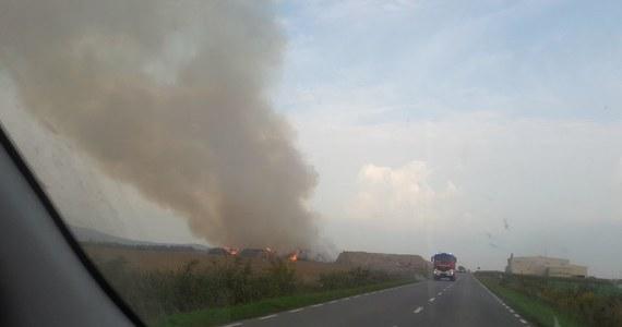 Pożar w zakładach wyrobu pelletów w Jordanowie Śląskim. Palą się składy słomy.