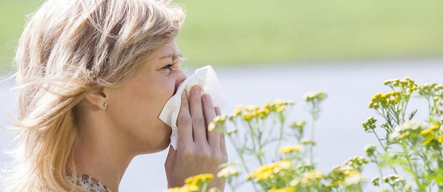 Okres zimowy wcale nie oznacza końca problemów z alergią. Co czwarta osoba na świecie ma uczulenie nawet zimą – alarmują naukowcy z Oksfordu, którzy wykazali, że istnieje alergia na zimę, która jest związana ze spadkiem temperatury. Nie zapominajmy również, że jesień i zima to nie koniec problemów dla alergików, bo wciąż pylą rośliny.