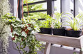 Pomocne rośliny