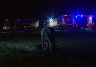 300 tys. złotych strat po pożarze w stadninie koni na Mazowszu