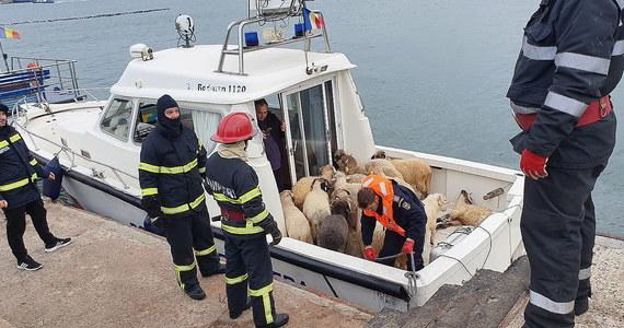 Statek, przewożący 14 tysięcy owiec, przewrócił się na Morzu Czarnym u wybrzeża Rumunii. Służby ratownicze próbują uratować tyle zwierząt, ile się da.