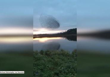 Niesamowita formacja szpaków na niebie