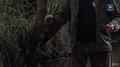 Kołowrotek - Łososiowate w rzece