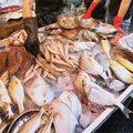 Polskie ryby są trujące i rakotwórcze