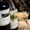 Wino: bezpieczna inwestycja