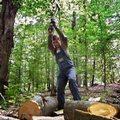 Bezmyślnie wycięli 70% drzew