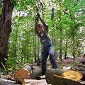 Polskie lasy pójdą pod młotek albo topór