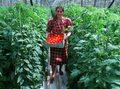PSL chce zwolnień podatkowych dla grup producentów owoców i warzyw