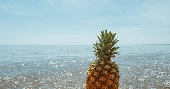 Turyści wracający z zagranicznych wojaży muszą uważać, co przywożą do Unii Europejskiej. Od dziś praktycznie nie można wwieźć żadnych owoców. Wyjątkiem są ananasy, kokosy, duriany, banany i daktyle. Nie wolno też przywozić warzyw, nasion i kwiatów.