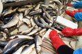 Rybacy dostali wyższe kwoty połowowe