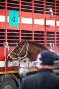 Chcemy wyeliminować handel końmi na jarmarkach