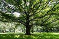 Nowe zasady wycinki drzew. Każdy będzie mierzył obwód