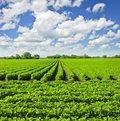 Rolnicy: Uwaga na jakość nawozów!