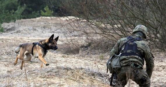 """Labradory, owczarki niemieckie, setery czy teriery będą wkrótce służyły w Wojskach Obrony Terytorialnej – poinformowała piątkowa """"Rzeczpospolita""""."""