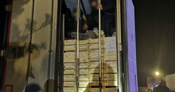 Pięciu nielegalnych imigrantów z Afganistanu, ukrywających się w transporcie owoców z Macedonii do Rosji, zatrzymała straż graniczna w Woskrzenicach Dużych (Lubelskie). Służby wezwał kierowca tira, którego przeraził się odgłosami dochodzącymi z jego naczepy. Okazało się też, że migranci pomylili ciężarówki.