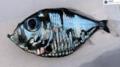 Ryba-Picasso: Obraz czy prawdziwe stworzenie?