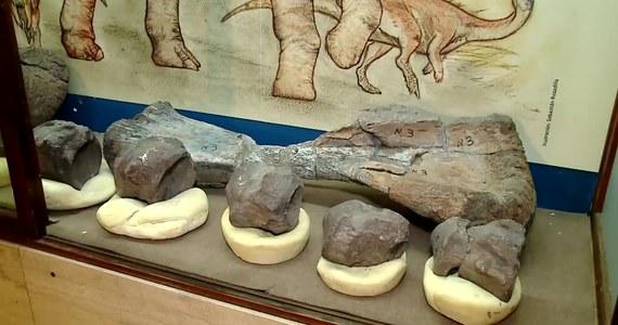 """Skamieliny, które zdaniem naukowców, należą do ostatnich dinozaurów na Ziemi zostały zaprezentowane na wystawie """"Koniec świata dinozaurów"""" w Muzeum Przyrodniczym w Buenos Aires. Fragmenty szkieletów zostały odkryte przez badaczy w pobliżu miasta El Calafate na południu Argentyny. Należą one do przedstawicieli gatunków Nullotitan glacialis i Isasicursor santacrucensis, które żyły 65-70 milionów lat temu, czyli tuż przed okresem masowego wymierania kredowego."""