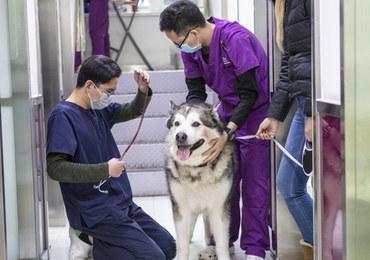 Koronawirus w Chinach. Tysiące porzuconych psów skazanych na śmierć głodową