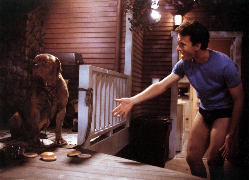 """O powstaniu serialowej wersji popularnej policyjnej komedii """"Turner i Hooch"""" mówiło się już od jakiegoś czasu. Teraz plany jej nakręcenia przez platformę streamingową Disney+ nabierają jeszcze bardziej realnych kształtów. Obsadzona została bowiem tytułowa rola Turnera, którego w filmie z 1989 roku zagrał Tom Hanks. Wcieli się w niego Josh Peck."""