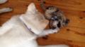 Pies troszczy się o swojego przyjaciela kota