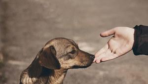 Streamerzy urządzili pomoc dla psów i kotów ze schronisk