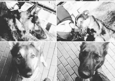 Śmierć 6 policyjnych psów. Znamy przyczynę awarii ciepłowniczej