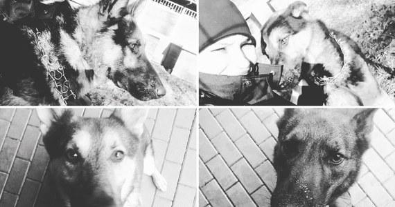 """""""Liczymy na pomoc z  innych komend"""" - mówi nam Sylwester Marczak z Komendy Stołecznej Policji po śmierci 6 psów, które zginęły, gdy laboratorium kryminalistyczne zostało zalane gorącą wodą z powodu awarii sieci ciepłowniczej."""