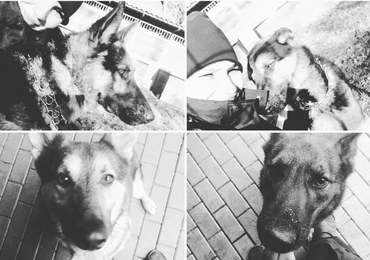 Policyjne psy zginęły po awarii ciepłowniczej. Jest śledztwo