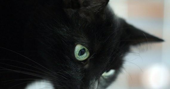 Przed kupowaniem zwierząt przez internet ostrzega w najnowszym raporcie Towarzystwo Opieki nad Zwierzętami. Inspektorzy przeanalizowali ponad pół tysiąca umieszczonych w sieci ogłoszeń. Tylko kilka procent z nich spełniało standardy etyczne.