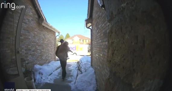 Trzyletnia suczka rasy golden retriever ukradkiem wyszła przez niedomknięte drzwi. Czujny kurier przyniósł psa do domu… na rękach. Całe zdarzenie uchwyciły kamery monitoringu.