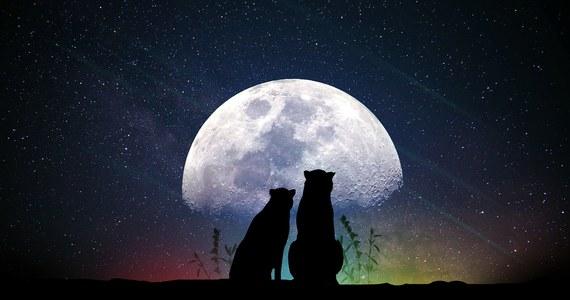 20 marca rozpoczyna się astronomiczna wiosna. W jej trakcie na wieczornym niebie można będzie zaobserwować jasno świecącą planetę Wenus, tworzącą malownicze konfiguracje z innymi obiektami niebieskimi.