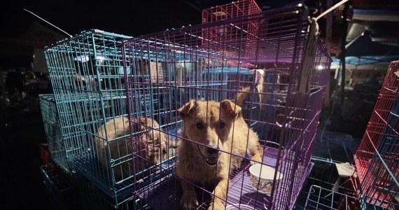 """Miasto Shenzhen na południu Chin ogłosiło w czwartek zakaz jedzenia psów i kotów w ramach walki z handlem dzikimi zwierzętami po wybuchu pandemii koronawirusa. Przepisy, wchodzące w życie 1 maja, określono jako odpowiedź na """"wymogi współczesnej cywilizacji""""."""