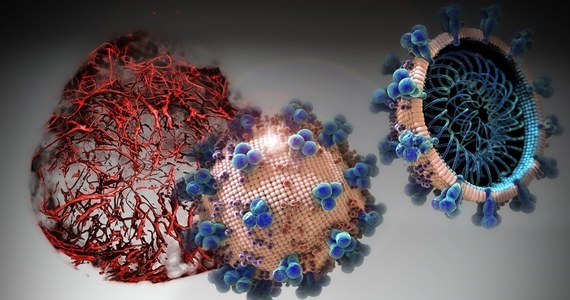 """Lek testowany wcześniej w terapii chorób płuc może pomóc w terapii COVID-19 na wczesnym etapie rozwoju choroby - piszą na łamach czasopisma """"Cell"""" naukowcy z Instytutu Karolińskiego w Szwecji, University of British Columbia i University of Toronto w Kanadzie oraz Institute for Bioengineering of Catalonia w Hiszpanii. Badania na preparatach komórkowych i tkankowych pokazały, że enzym hrsACE2 może blokować wnikanie koronawirusa do ludzkich komórek i obniżyć wiremię o czynnik 1000 do 5000. Zdaniem autorów pracy, lek daje nadzieję na pomoc pacjentom we wczesnym stadium choroby. Chcą rozpocząć wkrótce testy kliniczne w Chinach."""