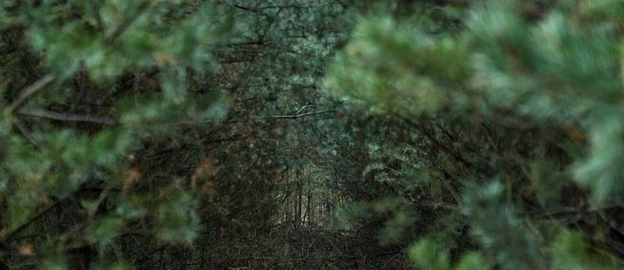 """""""Pojawiające się w mediach informacje, że wprowadzony zakaz wstępu do lasów nie obejmuje myśliwych, to nieprawda"""" - poinformował resort środowiska. Jak wyjaśniono, do 11 kwietnia myśliwi nie mogą organizować w lesie polowań ani nawet przebywać w lasach."""
