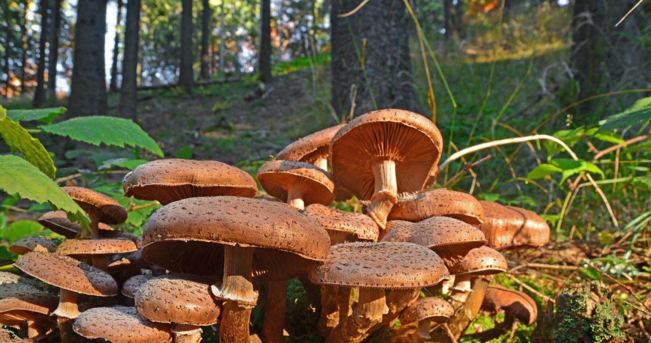 Чи їстівні гриби також отруйні?