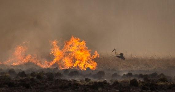 """Już około 6 tys. hektarów niezwykle cennych przyrodniczo terenów objął pożar w Biebrzańskim Parku Narodowym. Do akcji zaangażowano wiele zastępów straży pożarnej, samoloty i specjalistyczny sprzęt, ale wciąż nie wiadomo, ile jeszcze potrwa akcja gaśnicza. W płomieniach już zginęło wiele zwierząt. Świadkiem tragicznych scen była jedna z przewodniczek po parku. """"Po prostu się popłakałam"""" – przyznała w rozmowie z reporterem RMF FM Piotrem Bułakowskim, który relacjonował dla nas działania służb."""
