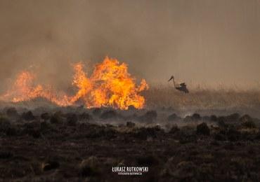 Pożar w Biebrzańskim Parku Narodowym. Ogień objął blisko 6 tys. hektarów