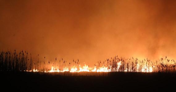 Nie powiększa się obszar objęty pożarem w Biebrzańskim Parku Narodowym - poinformowała w czwartek wieczorem straż pożarna. W nocy teren w newralgicznych miejscach ma być dozorowany przez strażaków; będzie też prowadzony monitoring z użyciem dronów i helikoptera.