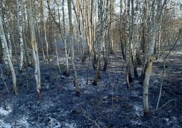 Strażacy pilnują pożarzysko w Biebrzańskim Parku Narodowym. Akcja gaśnicza zakończona