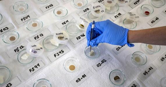 """""""Łowcy wirusów"""". Tak nazywa się grupę badaczy, którzy objeżdżają cały świat w poszukiwaniu nowych szczepów wirusów zwierzęcych po to, by badać, które z nich mogą potencjalnie przenieść się na człowieka i wywołać pandemię podobną do tej, której świadkami jesteśmy teraz. Ja mówił dla CNN Peter Daszak z amerykańskiej organizacji pozarządowej specjalizującej się w wykrywaniu nowych wirusów i zapobieganiu pandemii, do tej pory - po zbadaniu 15 tysięcy próbek - naukowcom udało się zidentyfikować około 500 nowych koronawirusów."""