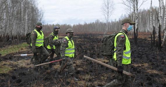 Pożar w Biebrzańskim Parku Narodowym i jego otulinie objął maksymalnie nieco ponad 5,5 tys. ha gruntów Skarbu Państwa i prywatnych - mówi dyrektor parku Andrzej Grygoruk. Straty, jakie ogień wywołał w przyrodzie, będą dokładnie oceniane. Dyrektor parku uważa, że pożar spowodował podpalacz. Wyznaczył nagrodę za jego wskazanie.