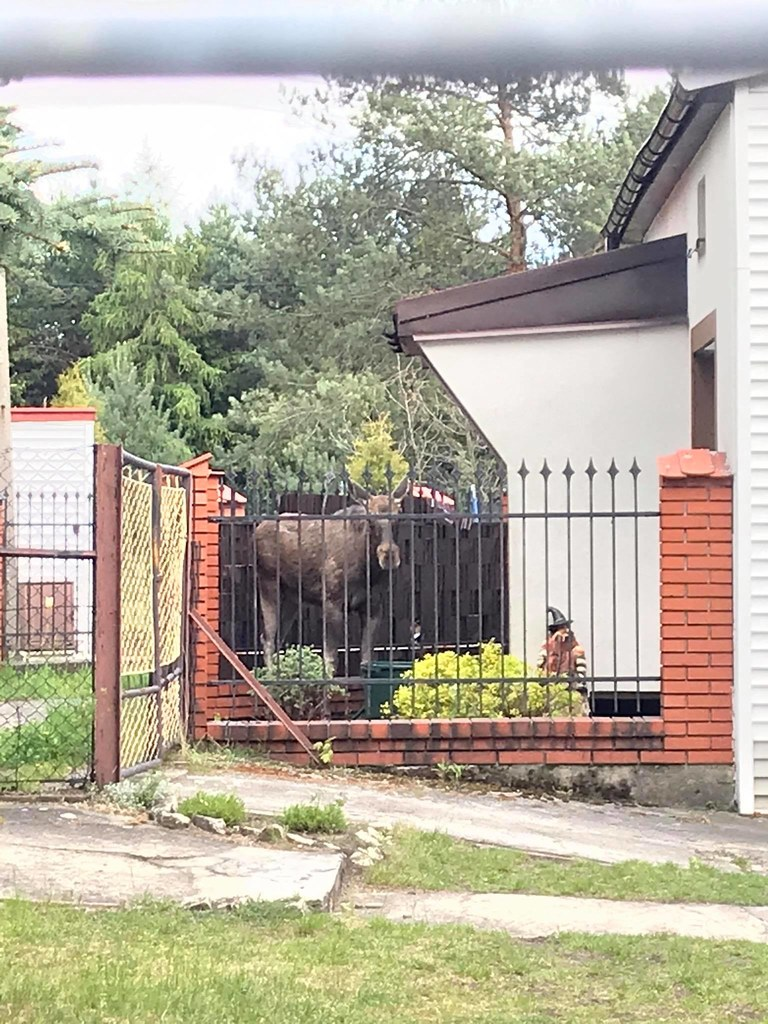 Foto. Straż Miejska w Sosnowcu