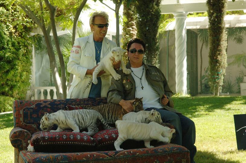"""""""Król tygrysów"""" - dokumentalny serial, którego głównym bohaterem jest Joe Exotic, to jeden z największych hitów Netfliksa. Nic dziwnego, że gigant streamingowy zamierza wykorzystać popularność tej opowieści o ekscentrycznym właścicielu prywatnego zoo z Oklahomy i już szykuje kolejną produkcję spod znaku """"Króla tygrysów"""". Nie będzie ona jednak kontynuacją historii Exotica. Tym razem twórcy serialu skupią się na innej historii związanej z dzikimi kotami."""