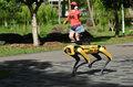 Robotyczny pies patroluje parki w Singapurze