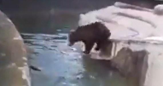 Dwa lata ograniczenia wolności i 5 tys. złotych nawiązki - takim karom dobrowolnie poddał się mężczyzna, który wczoraj wtargnął na wybieg dla niedźwiedzi w warszawskim zoo – dowiedział się reporter RMF FM Krzysztof Zasada.