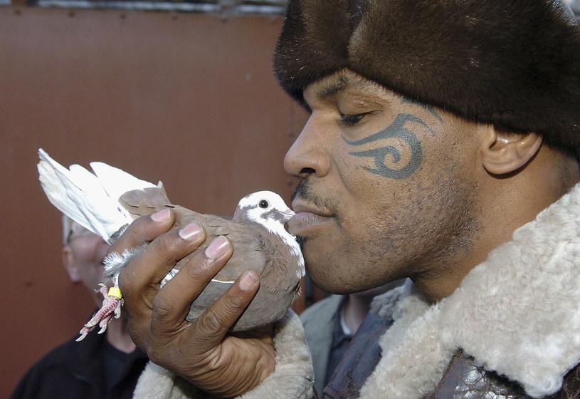 Eugeniusz Bodo zabierał swojego ogromnego doga do warszawskich kawiarni. Mike Tyson miał kilka tygrysów, potem zaczął hodować gołębie. Z kolei George Clooney przez 18 lat opiekował się świnką wietnamską. Które zwierzęta zdobywają serca gwiazd?