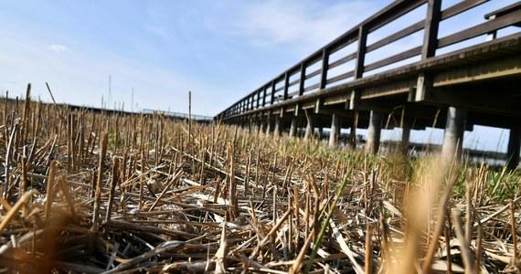 Susza rolnicza występuje w całym kraju. Największe niedobory wody zanotowano w województwie lubuskim i wielkopolskim. Susza najbardziej dotyka uprawy zbóż jarych i ozimych - informuje Instytut Uprawy Nawożenia i Gleboznawstwa (IUNG).