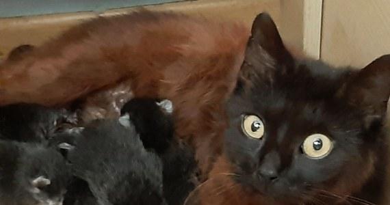 Interwencja policjantów uratowała życie czterem kociętom. Bezbronne zwierzaki zostały wyrzucone do kontenera na śmieci na jednym z osiedli w Słubicach w Lubuskiem. Zarzuty w tej sprawie grożą 18-latkowi - poinformował rzecznik lubuskiej policji Marcin Maludy.